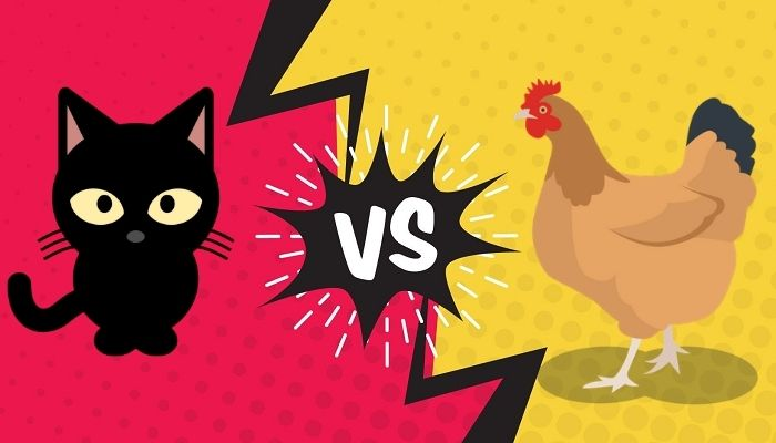 Do cats eat chickens?