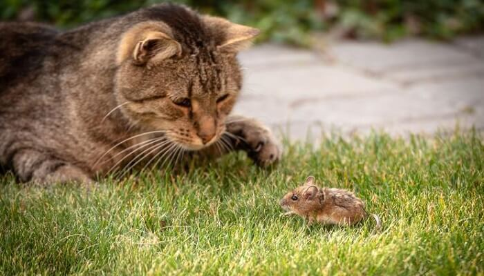 What parts of a mouse does a cat not eat?