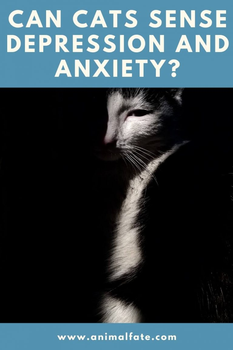 can cats sense depression and anxiety