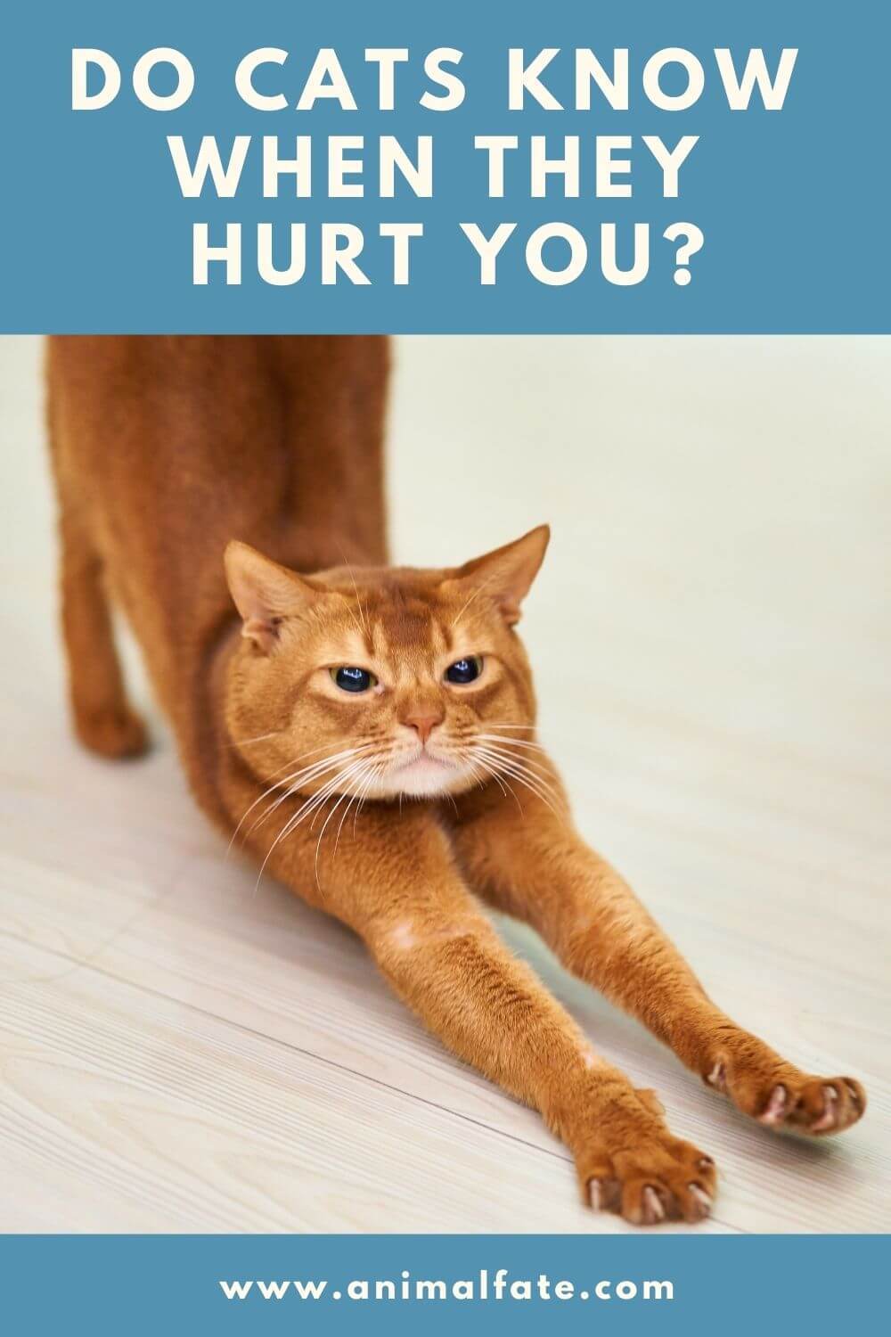 do cats know when they hurt you