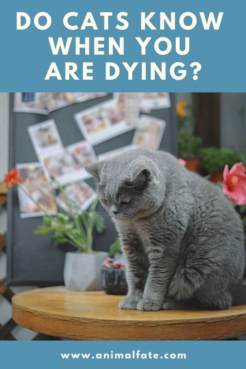do cats know when you are dying
