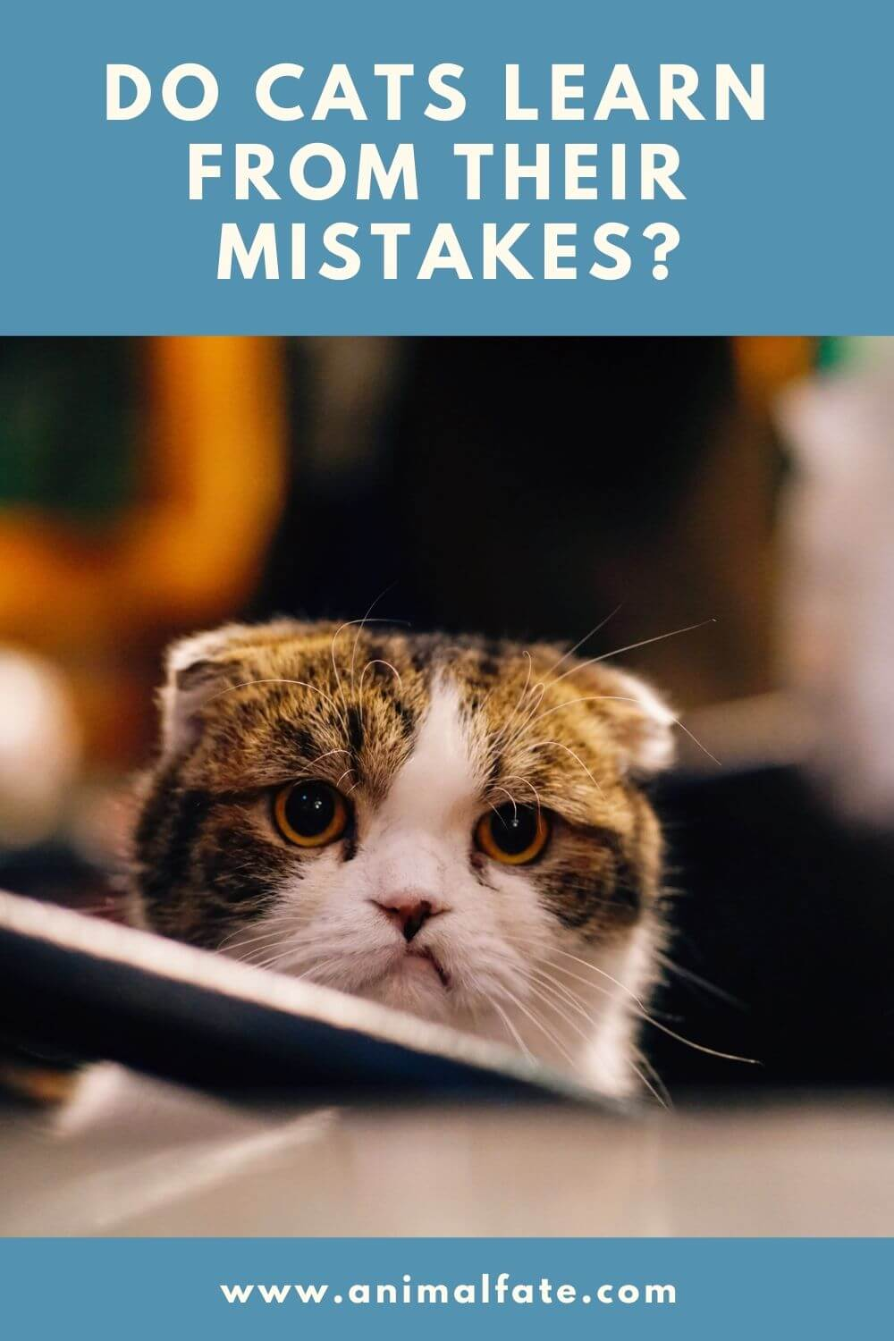 do cats learn from their mistakes