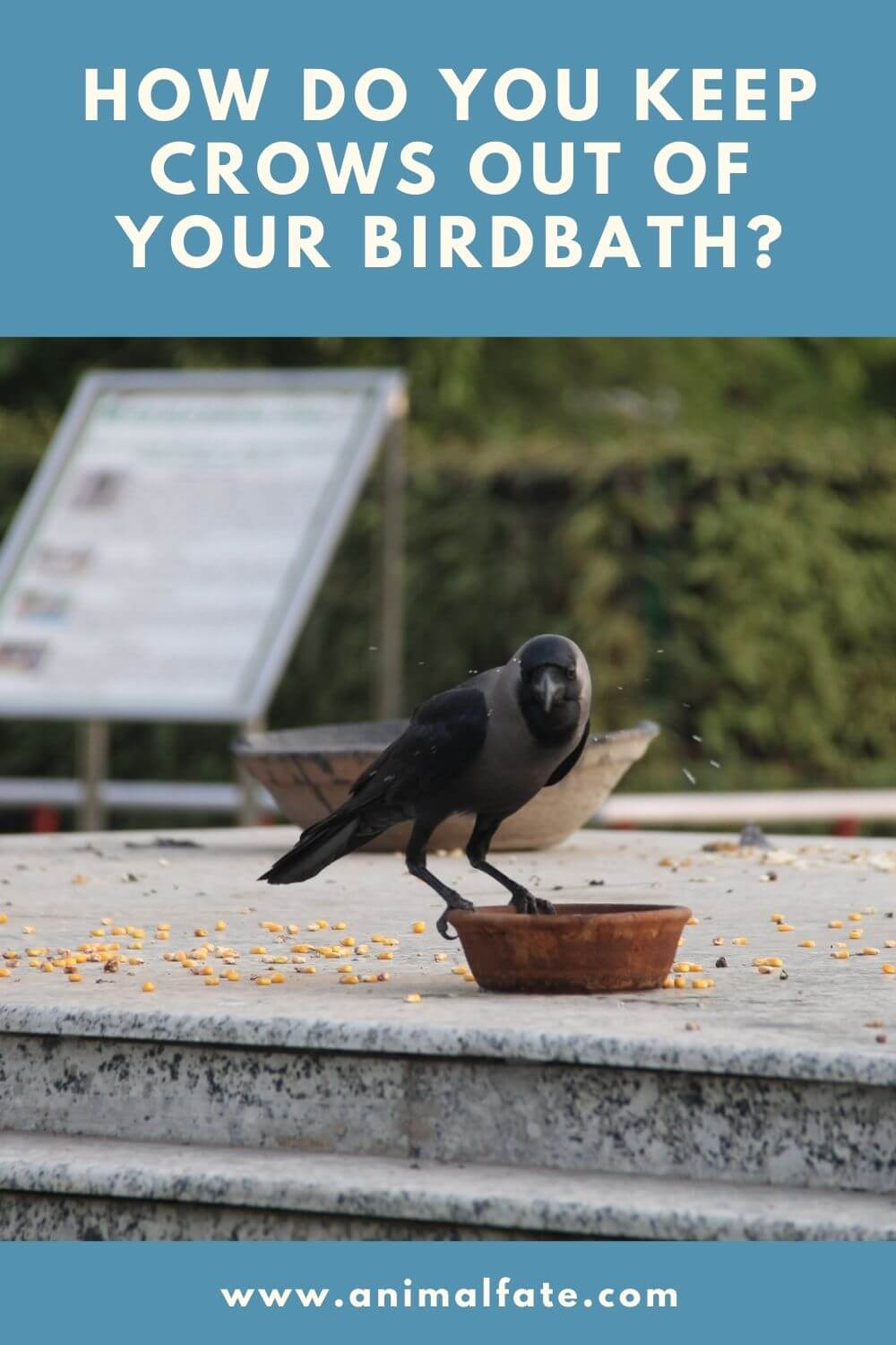 how do you keep crows out of your birdbath