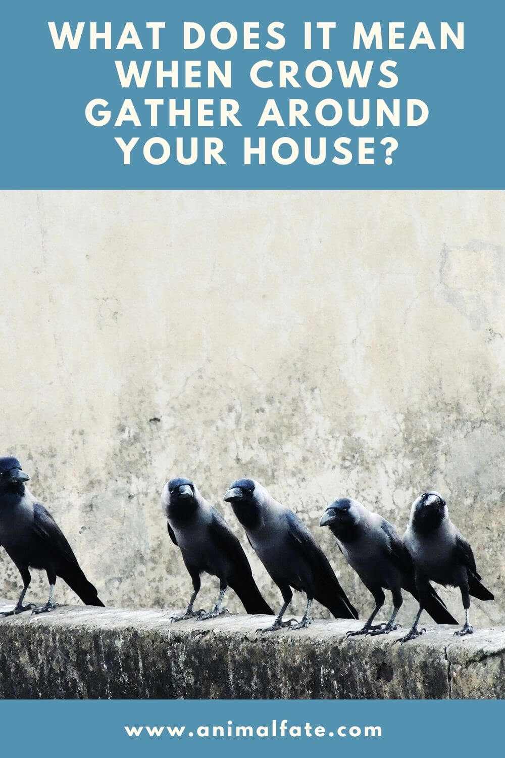what does it mean when crows gather around your house