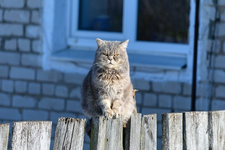 why your cat acts strange with you