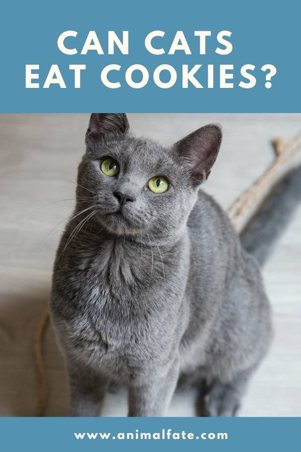 can cats eat cookies