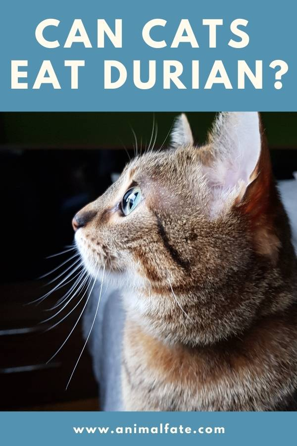 can cats eat durian