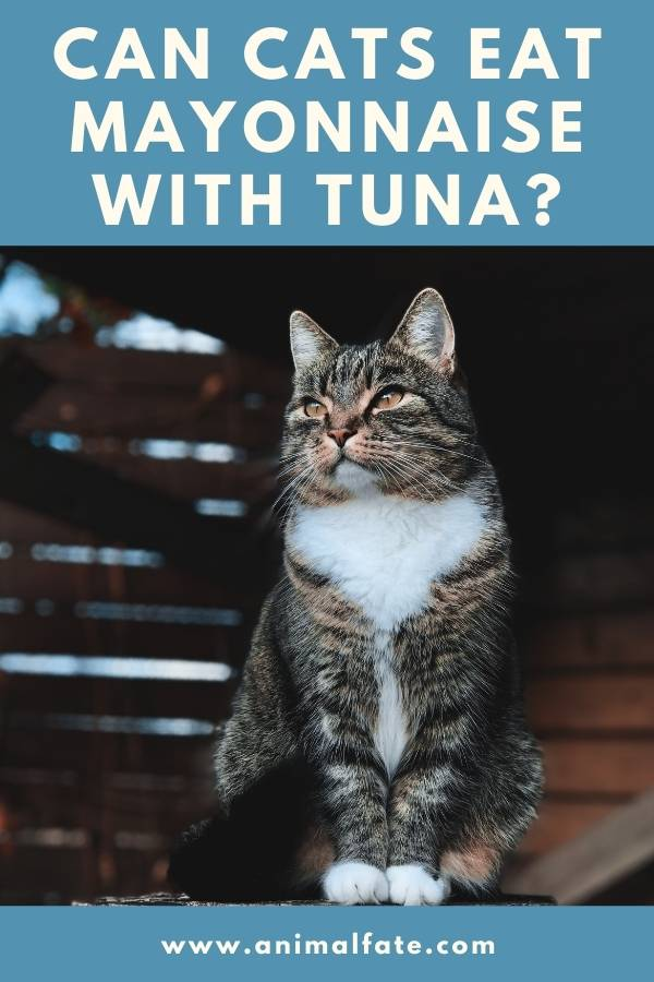 can cats eat mayonnaise with tuna