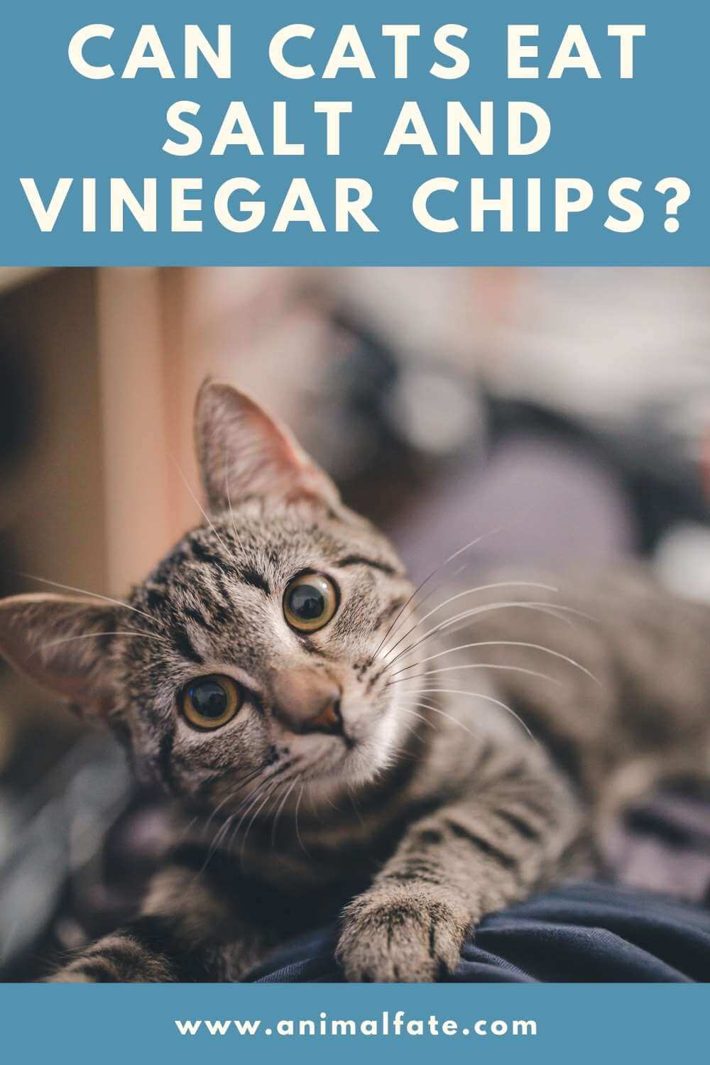 can cats eat salt and vinegar chips