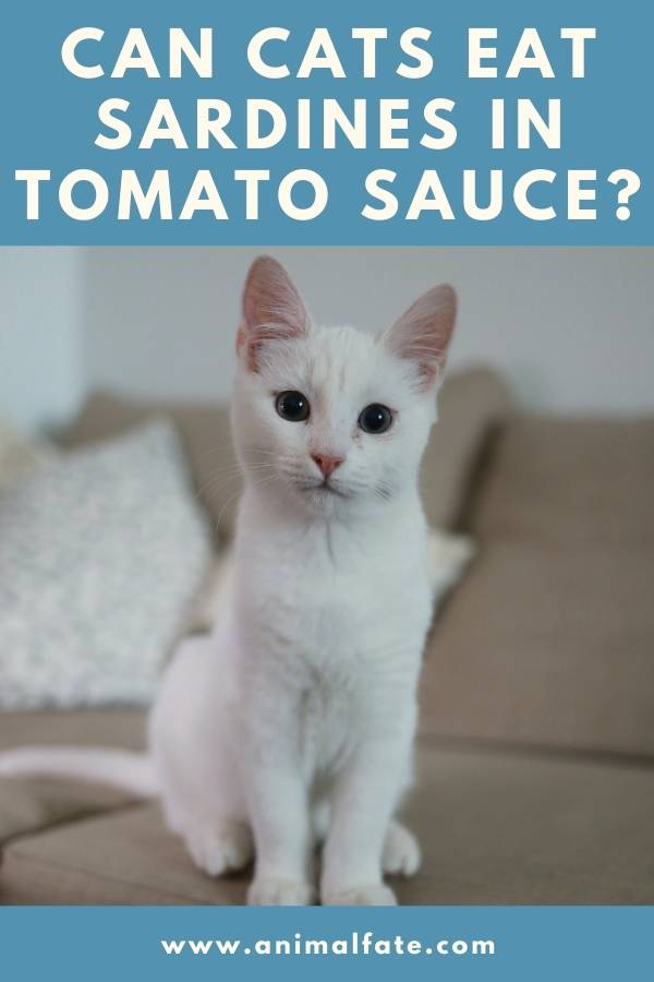can cats eat sardines in tomato sauce