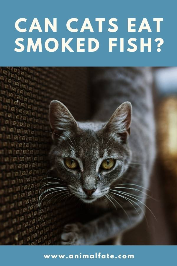 can cats eat smoked fish