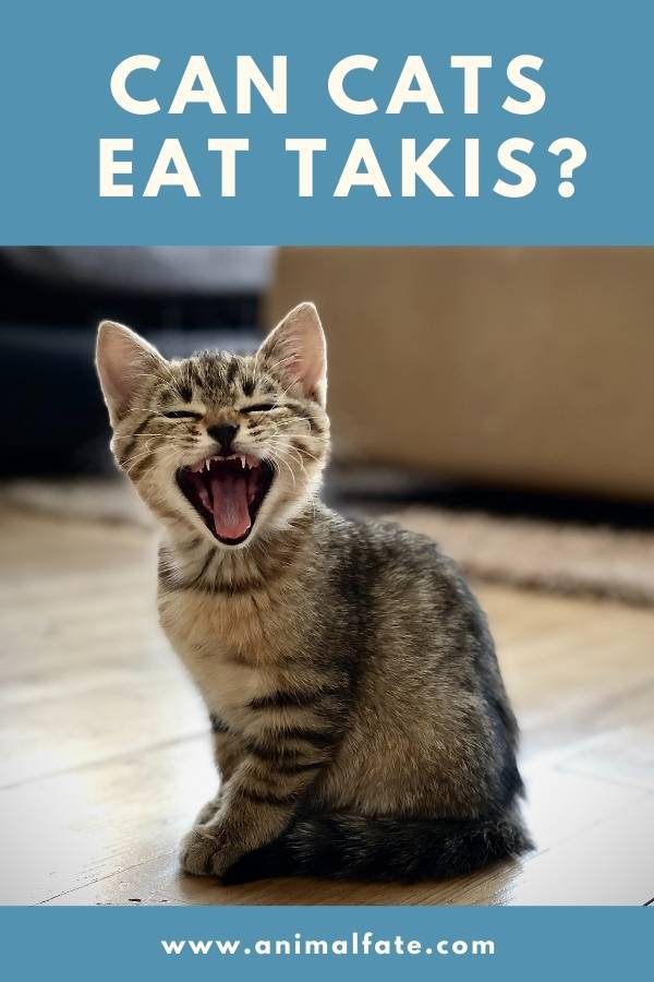 can cats eat takis