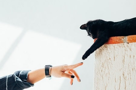 cat and paw