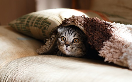cat chilling under the blanket