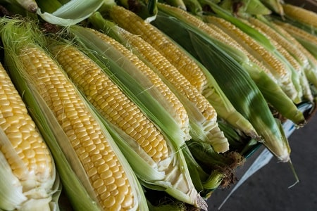 corn with husks and silk