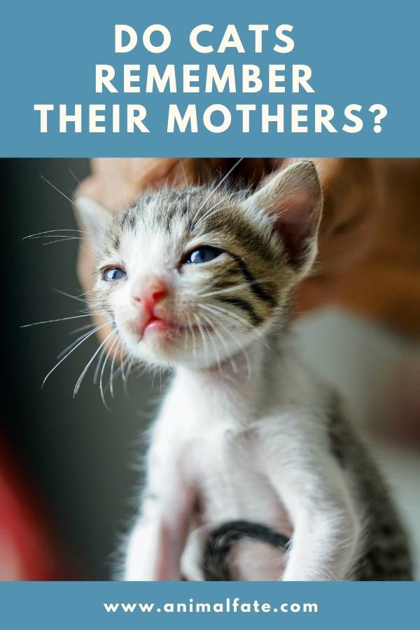 do cats remember their mothers