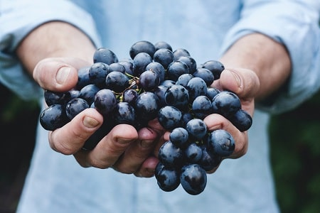 grapes for pigs