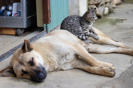 love between cat and dog