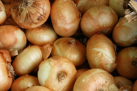 onions and pigs