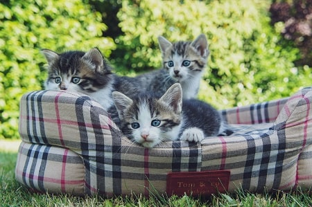 three young kittens