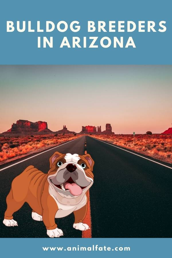 bulldog breeders in arizona