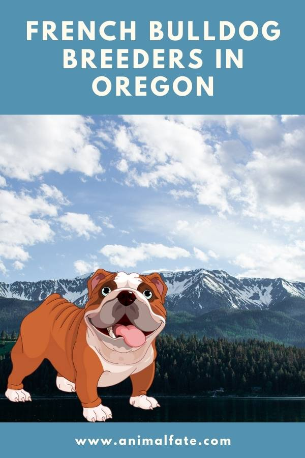 french bulldog breeders in oregon