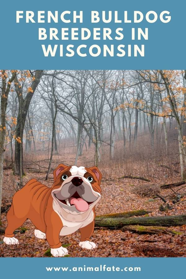 french bulldog breeders in wisconsin