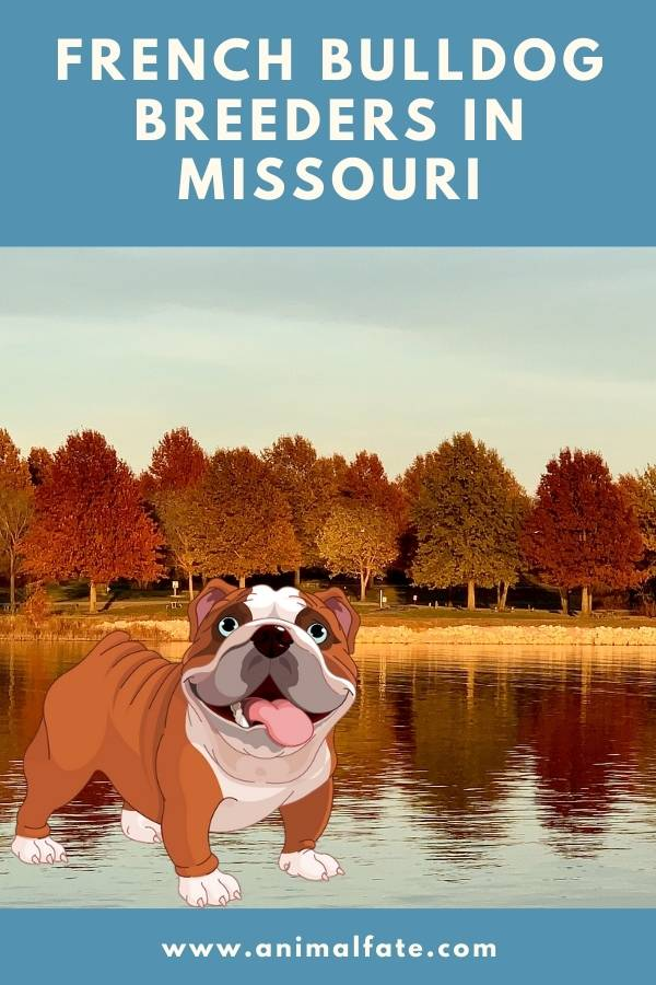 french bulldog breeders missouri