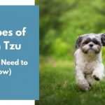 types of shih tzu