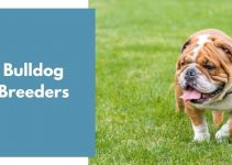 Bulldog Breeders | Bulldog Puppies for Sale