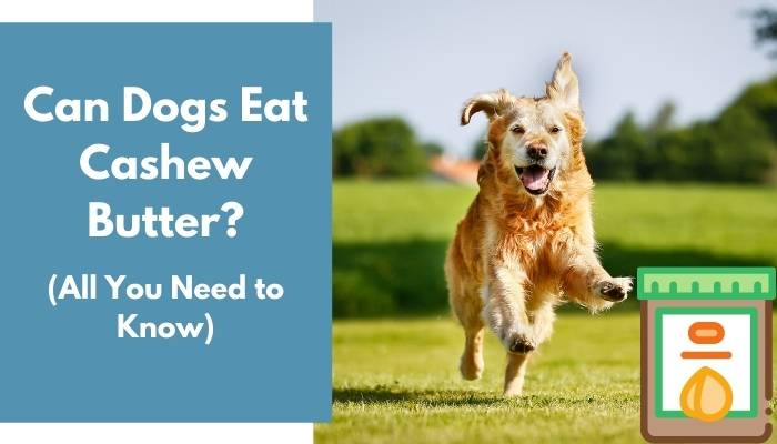 Can Dogs Eat Cashew Butter