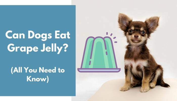 Can Dogs Eat Grape Jelly