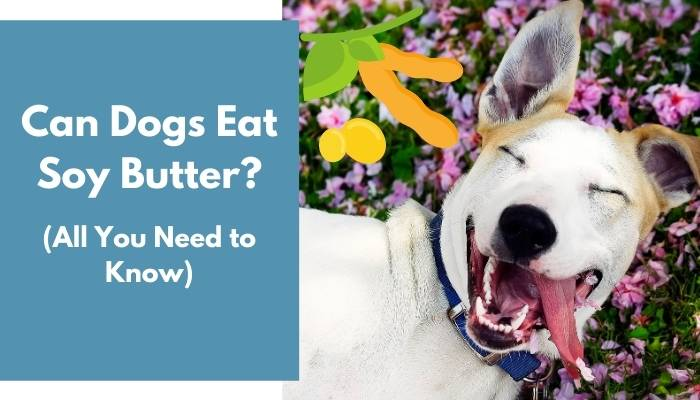 Can Dogs Eat Soy Butter