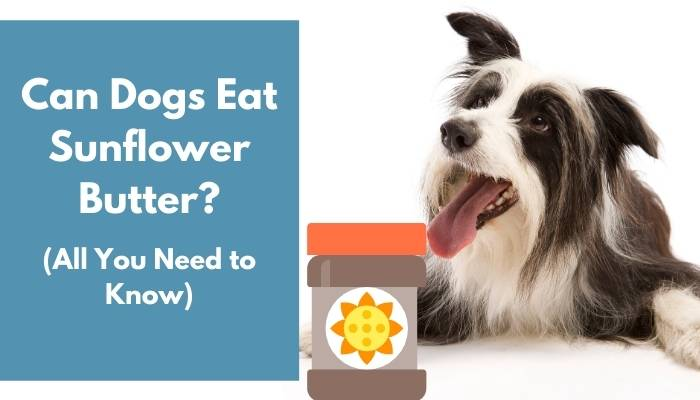 Can Dogs Eat Sunflower Butter