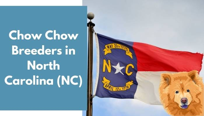 Chow Chow Breeders in North Carolina (NC)