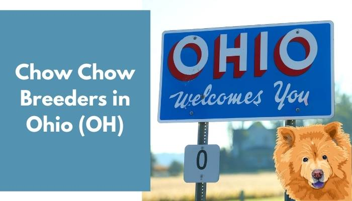 Chow Chow Breeders in Ohio (OH)