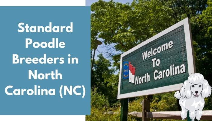 Standard Poodle Breeders in North Carolina (NC)