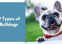 9 Types of Bulldogs [All You Need to Know]