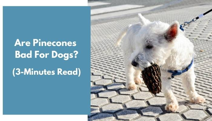 are pinecones bad for dogs