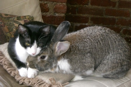 cat and rabbit together