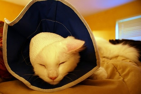 cat with medical collar