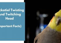 Cockatiel Twisting And Twitching Head (Important Facts)