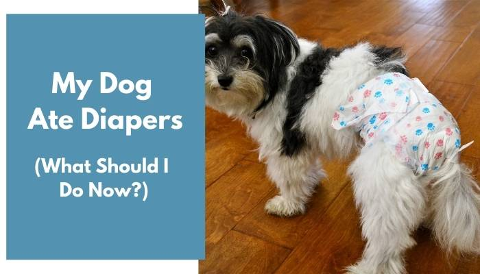 my dog ate diapers