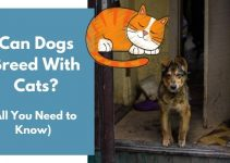 Can Dogs Breed With Cats?