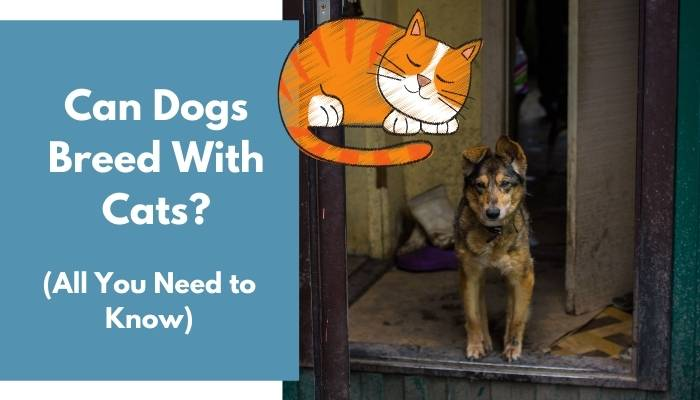 Can Cats And Dogs Mate 3 Minute Read Animalfate