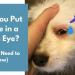 Can You Put Visine in a Dog's Eye
