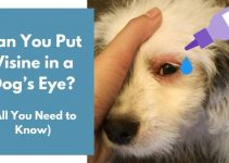 Can You Put Visine in a Dog's Eye? (Important Facts)