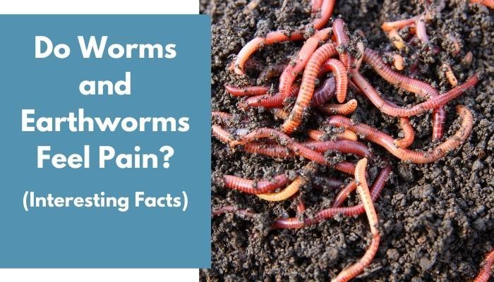 Do Worms and Earthworms Feel Pain