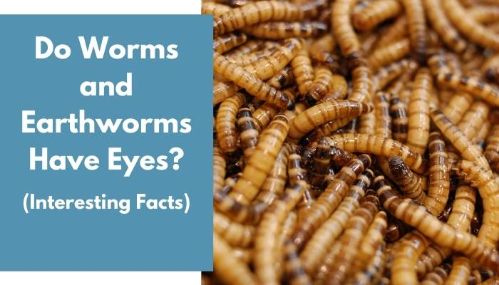 Do Worms and Earthworms Have Eyes