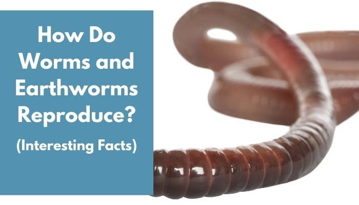 How Do Worms and Earthworms Reproduce